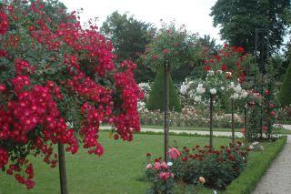 lave træer til haven